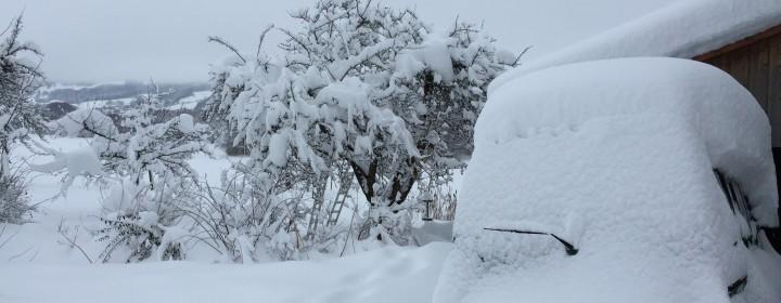 Neige de début 2015