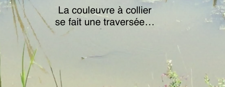 couleuvre.jpg
